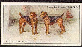 "Airedale Terrier  card from England.  This is a card from a set of 50 that was issued by John Player and Sons in 1924, called ""Dogs -- Scenic Background.""  The reverse side contains a description of the breed. Airedale Card 10 (Players Scenic, 1924)"