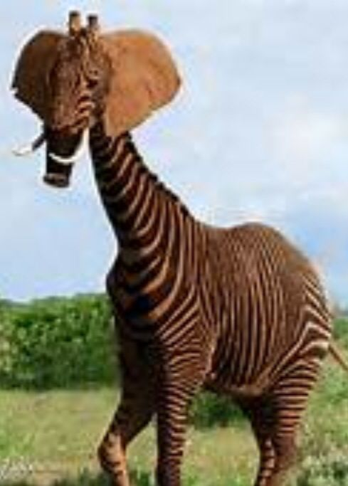 elephant zebra giraffe animals pinterest zebras