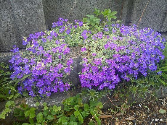 my favorite:) lavender flowers
