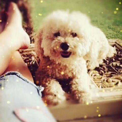 Buy Pet Accessories Online In 2020 Pet Accessories Buy Pets Pet Supplies