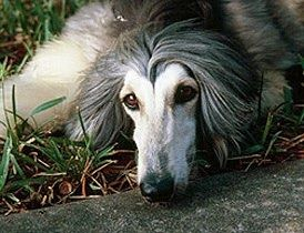 """""""An animal's eyes have the power to speak a great language."""" ~ Martin Buber"""