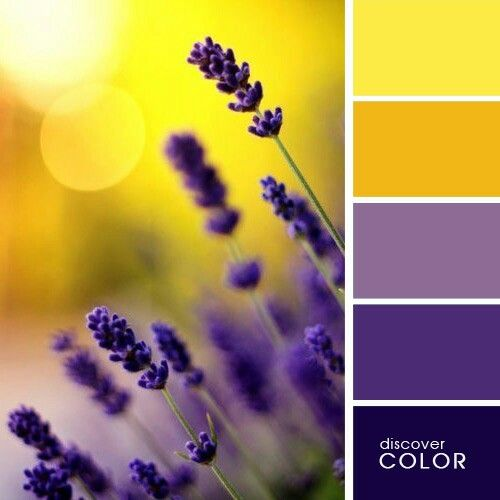 Lemon Sunshine Yellow Shades Paired With Lilac Lavender Plum Purple Shades Summer Color Palette Color Schemes Colour Palettes Color Palette Design