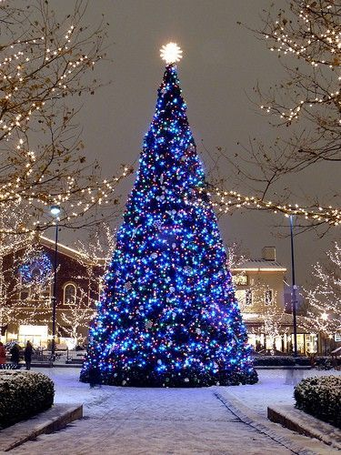 Blue lights on a Christmas tree are simply beautiful.