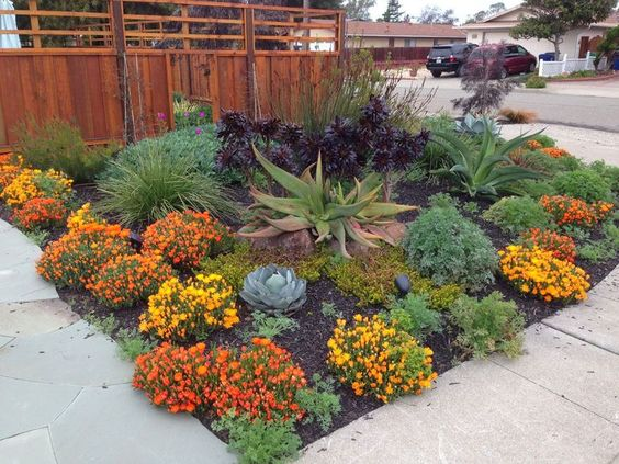 Save water with stunning drought resistant landscaping - Drought tolerant landscape design ...