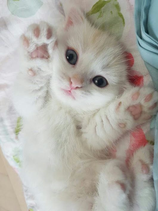 Pin By Alexandra On Perritos Kittens Cutest Baby Cats Cute Cats
