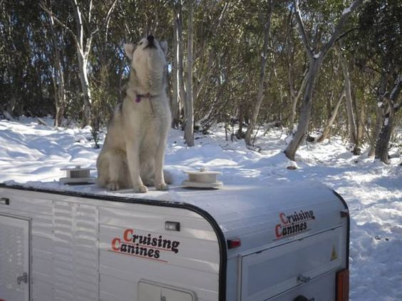 Kept Safe and Warm with Cruising Canines Dog Trailers
