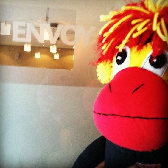 Phoenix at Envoy Inc.in Omaha talking monkey biz. #smacancer