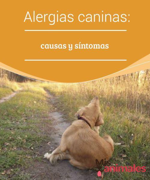 Tipos De Collares De Castigo Para Perros Alergias Caninas Causas Y Sintomas Perros Y Bebes Animales Y