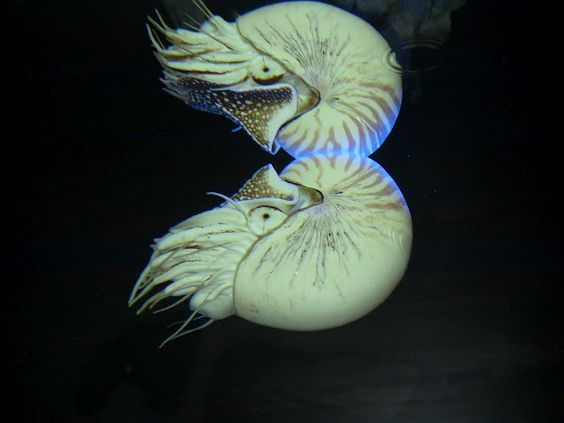 nautilus! they're amazing.