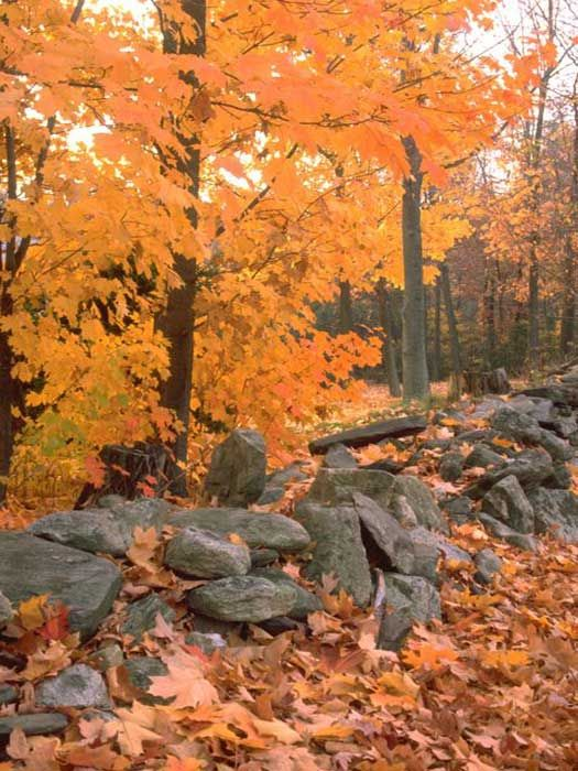 The Mohawk Trail, #Massachusetts :))) Go camping there in the summer :))