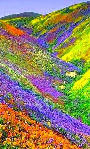 絵具を塗ったような綺麗で美しい花畑