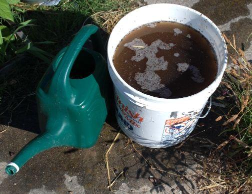 Magical Compost Tea
