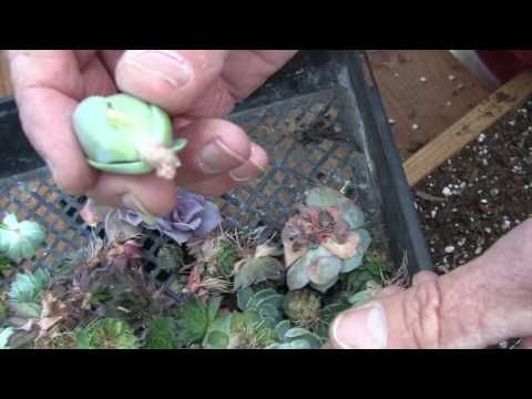 Gardening Rhythms: Vertical Garden /Succulents Part 2