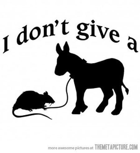 Rats and A rat on Pinterest
