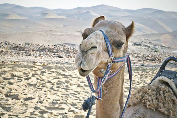 Camel by Liubov Stoliar on 500px