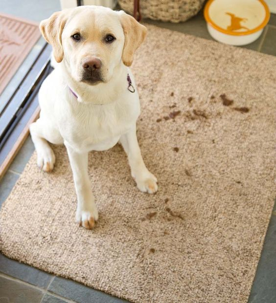 Rug Dog Won T Chew: Taupe, The O'jays And Shoes On Pinterest
