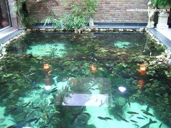 Indoor pond ponds and indoor on pinterest for Awesome koi ponds