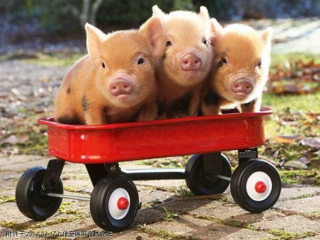 And These Little Piggies  Went To Market.... (20 pieces)