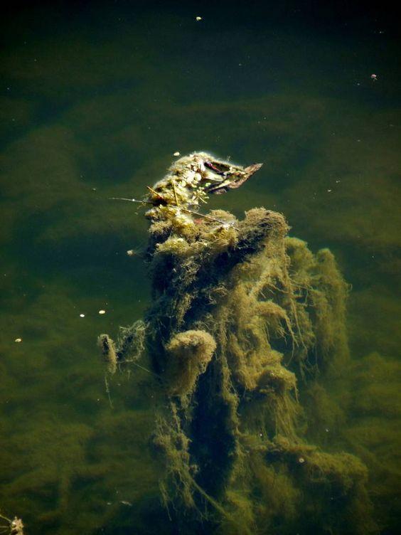 Photo : Au fil de l'eau