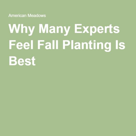 Why Many Experts Feel Fall Planting Is Best