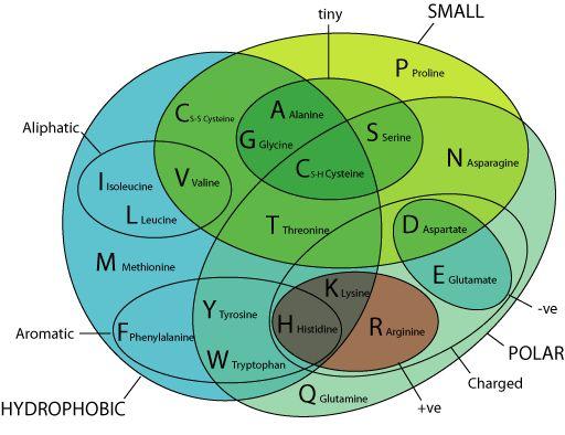 Amino Acid Properties Amino Acid Categories Pinterest - amino acid chart