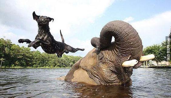 雖然Bella比Bubble這麼多,他們還是最好的朋友。