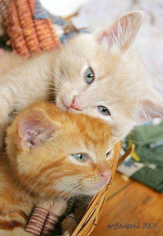 Bibbie and BowBow (from Good Morning Kitten)
