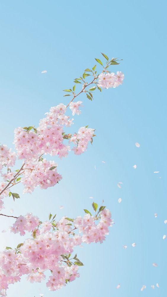 Pin Oleh Gina Abraham Di Wallpapers Bunga Sakura Pemandangan Khayalan Fotografi Seni