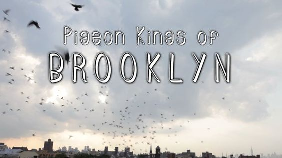Pigeon Kings of Bushwick