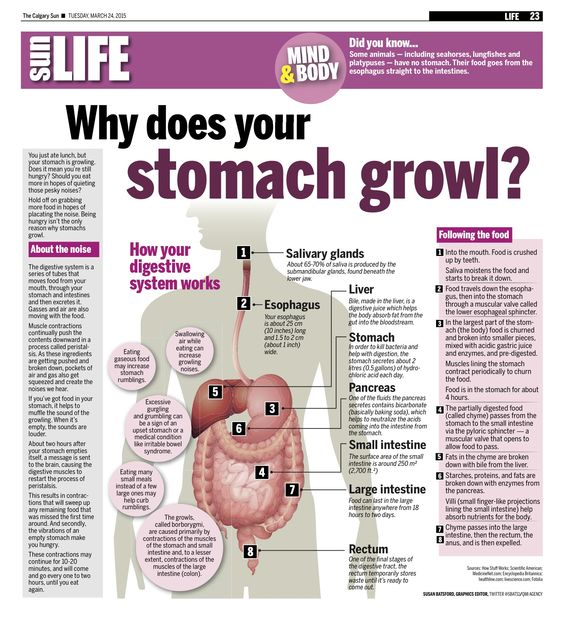 Images of Stomach Growling Sounds - #rock-cafe