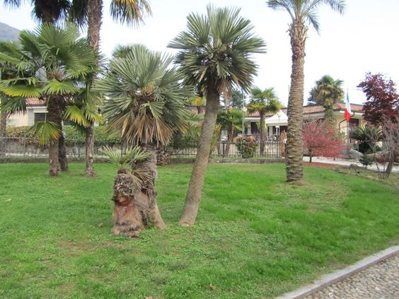 Gruppetto di Palme