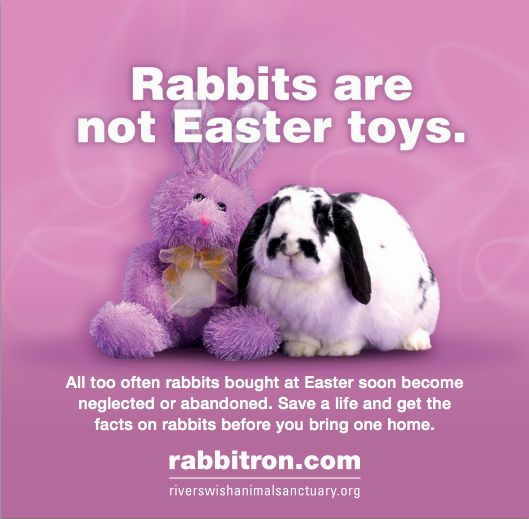 Parents, remember bunnies are pets, not Easter toys.      Don't buy, don't dump bunnies.