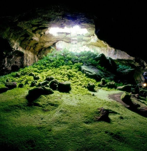 Underground garden, Lava Beds National Monument, Tulelake, California