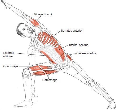 Utthita Parsvakonasana Estiramiento lateral Fortalece y estira las piernas, las rodillas y los tobillos Estira las ingles, la columna vertebral, la cintura, el pecho y los pulmones, y los hombros Estimula los órganos abdominales. Namaste. Fuente: Yoga Inspiration FB