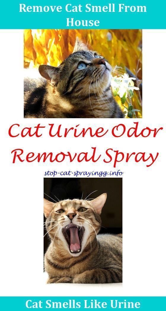 Cat Repellent Cat Pee On Bed Sleep Spray Against Cats Neutered Cat