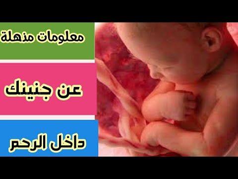 حقائق ومعلومات مذهلة عن حياة الجنين داخل الرحم Youtube Pandora Pandora Screenshot