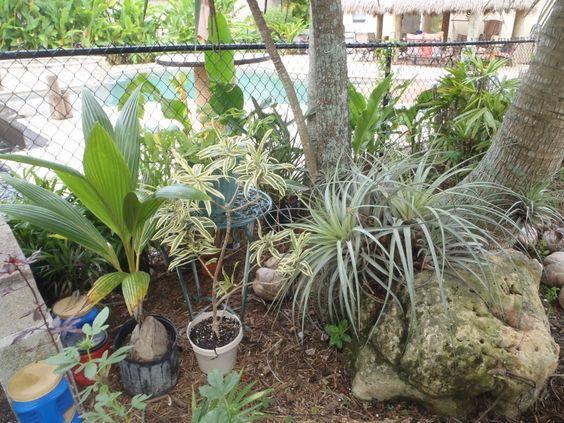 Garden Scene in the Dougherty Garden