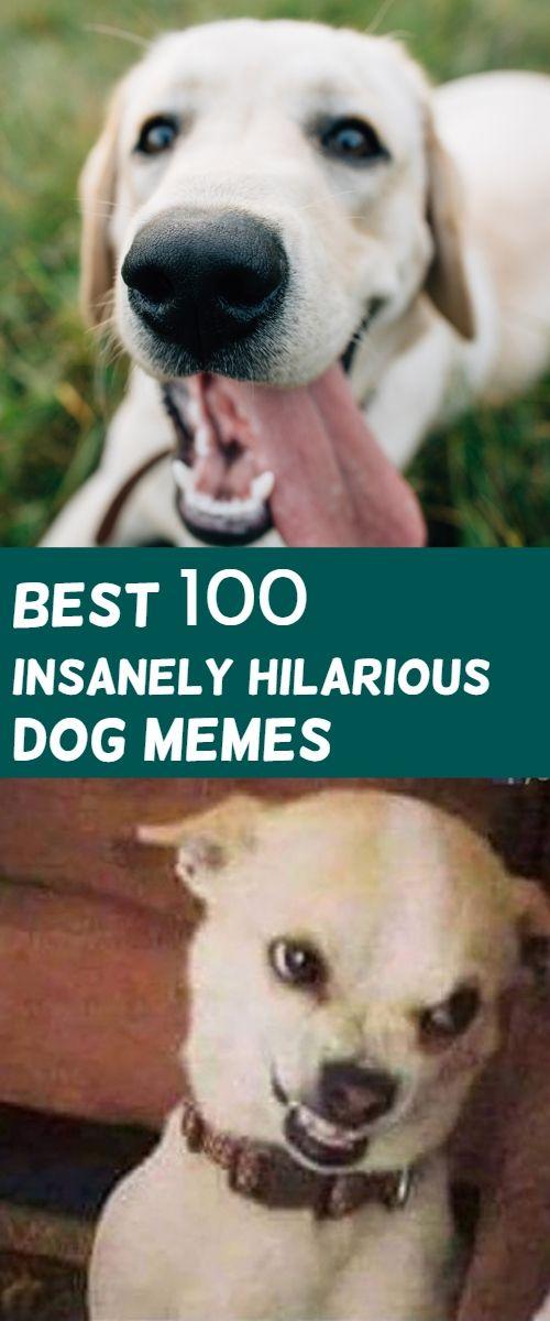 Insanely Hilarious Dog Memes Friday Dog Memes Funny Dog Memes Dog Memes Clean