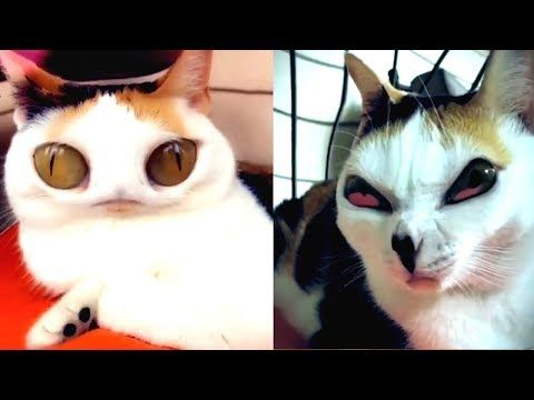 It S Scary Do Not Use Snapchat Filter On Your Cat Youtube
