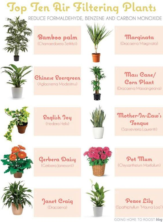 Houseplants for indoor air quality and on wiki http en for Indoor plants for better air quality