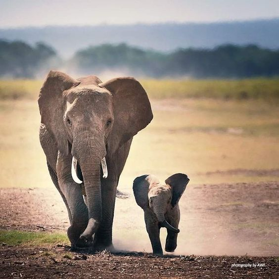 Mom and baby out jogging together 🐘🐘💕