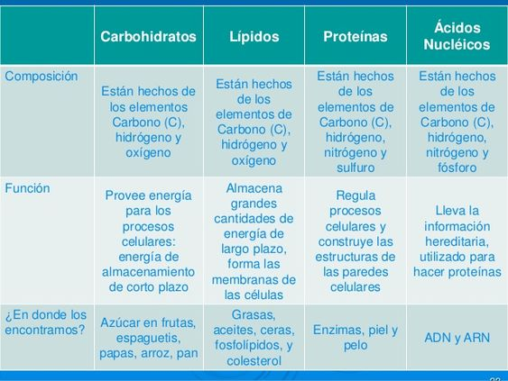Cuadros Comparativos De Carbohidratos Lípidos Proteínas Y ácidos Nucleicos Cuadro Comparativo Notas De Biología Clase De Biología Estudiar Biologia