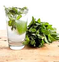 NGREDIENTS:  1 splash Phillips Peppermint Schnapps  1 oz. Phillips Prairie Vodka  1 Tbsp. honey  ½ small lime, cut into wedges  ¼ cup fresh mint leaves  Sparkling water    CREATE:  Muddle mint leaves, honey, lime wedges and schnapps in  a mixing glass.  Pour contents into serving glass, add ice and vodka, and top with sparkling water.  Stir well, garnish with a mint sprig and enjoy.