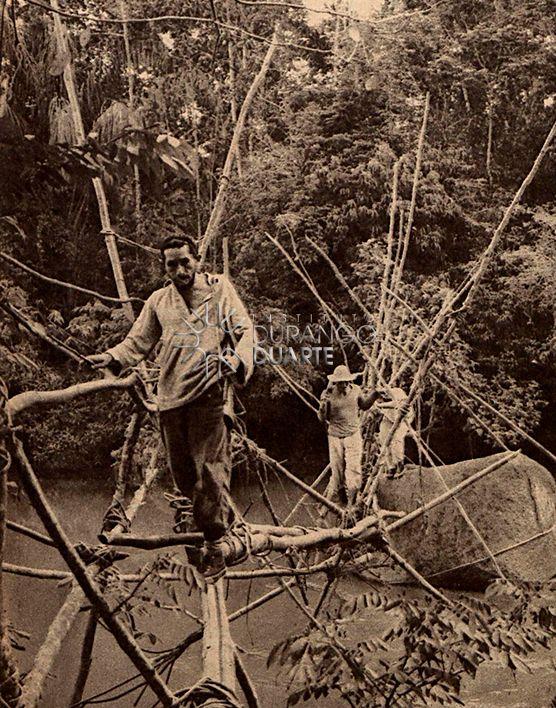 Uma Expedicao Pela Selva Amazonica Selva
