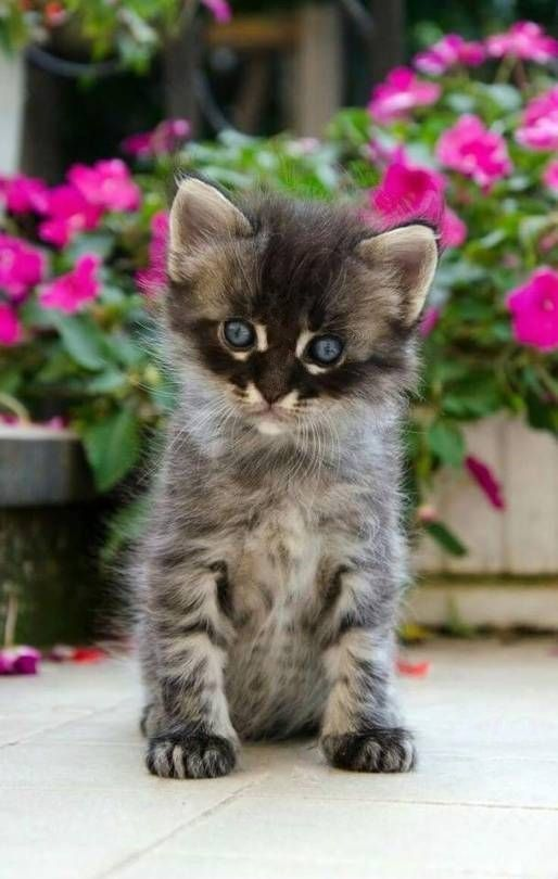 Littersolutionscat Spam Free Zone C Cool New Ways To Clean Cat Litter Kittens Cutest Tabby Kitten Tabby Cat Pictures