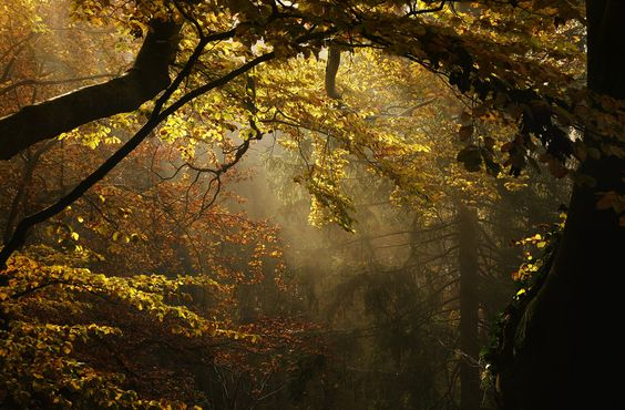 softly glowing golds drift gently into the woods & beckon dreamers to join the spirits of the mists!!! enter~