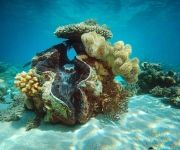 giant clam at Green Island  #ecotourism #queensland #australia