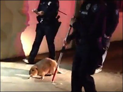 Cops escort lost beaver to safety