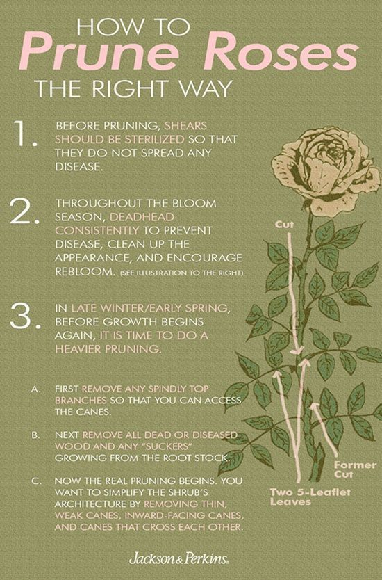 15 Clever Tips For Taking Care Of Your Flower Garden Rose Garden Design Flower Garden Rose Care