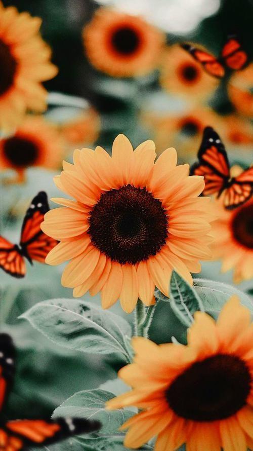 Phone Backgrounds Sunflower Iphone Wallpaper Butterfly Wallpaper Iphone Flower Phone Wallpaper